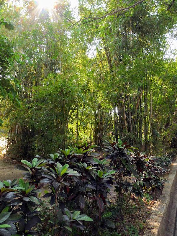 Chine .Fujian Gulang yu island 3 - P1020800.JPG