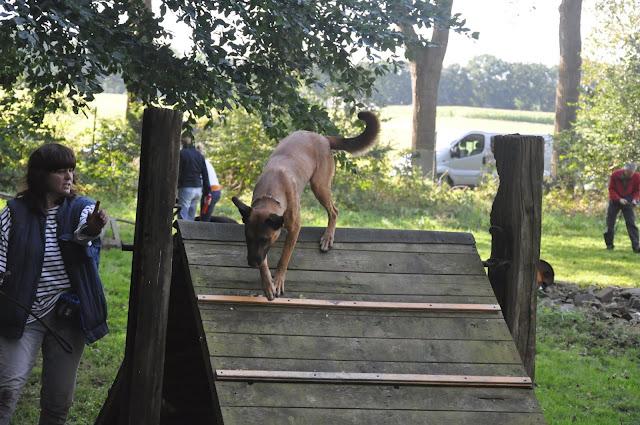 Survival voor Baas en Hond 2012 - DSC_0421.JPG