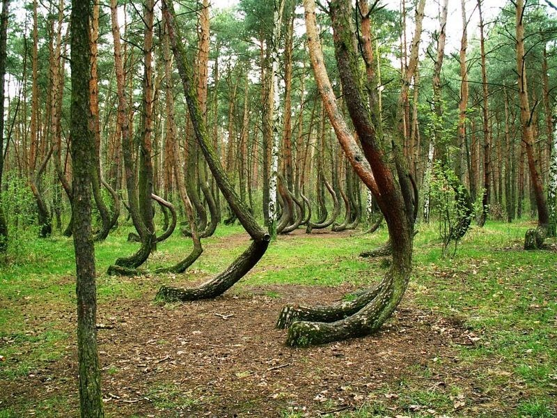 crooked-forest-poland-1