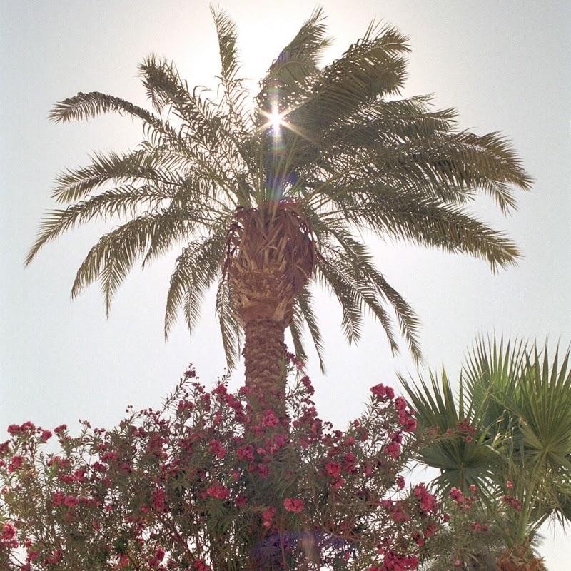 Luxor_25 Karnak Hibiscus.jpg