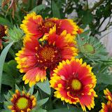 Gardening 2011 - 100_7262.JPG