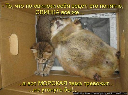 1453540501_kotomatricy-21