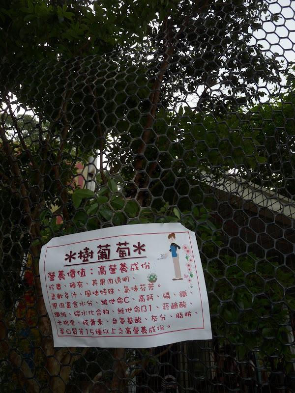 TAIWAN.Dans la région de MIAOLI - P1090505.JPG