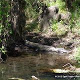 04-04-12 Hillsborough River State Park - IMGP4414.JPG