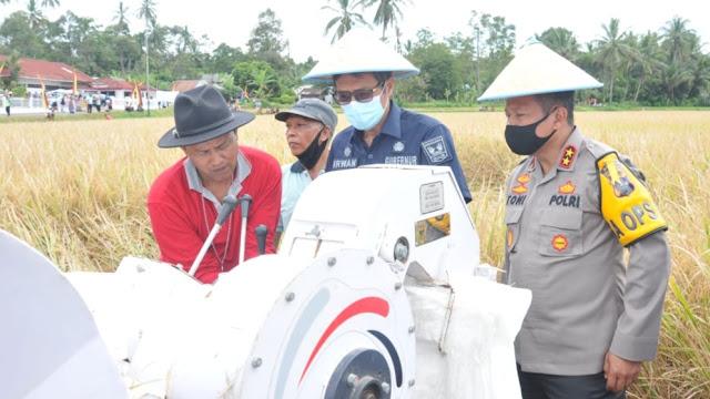 Gubernur dan Kapolda Sumbar Panen Raya Padi di Nagari Minangkabau.