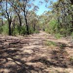Trail near Warrah Lookout (219338)