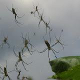 Colonie d'araignées dans le village de Shaxi (Yunnan), 11 août 2010. Photo : J.-M. Gayman