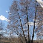 Река Усманка весенний паводок 058.jpg