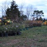 Hammo Fall Planting - Jim Murtagh - BC3G2503.jpg