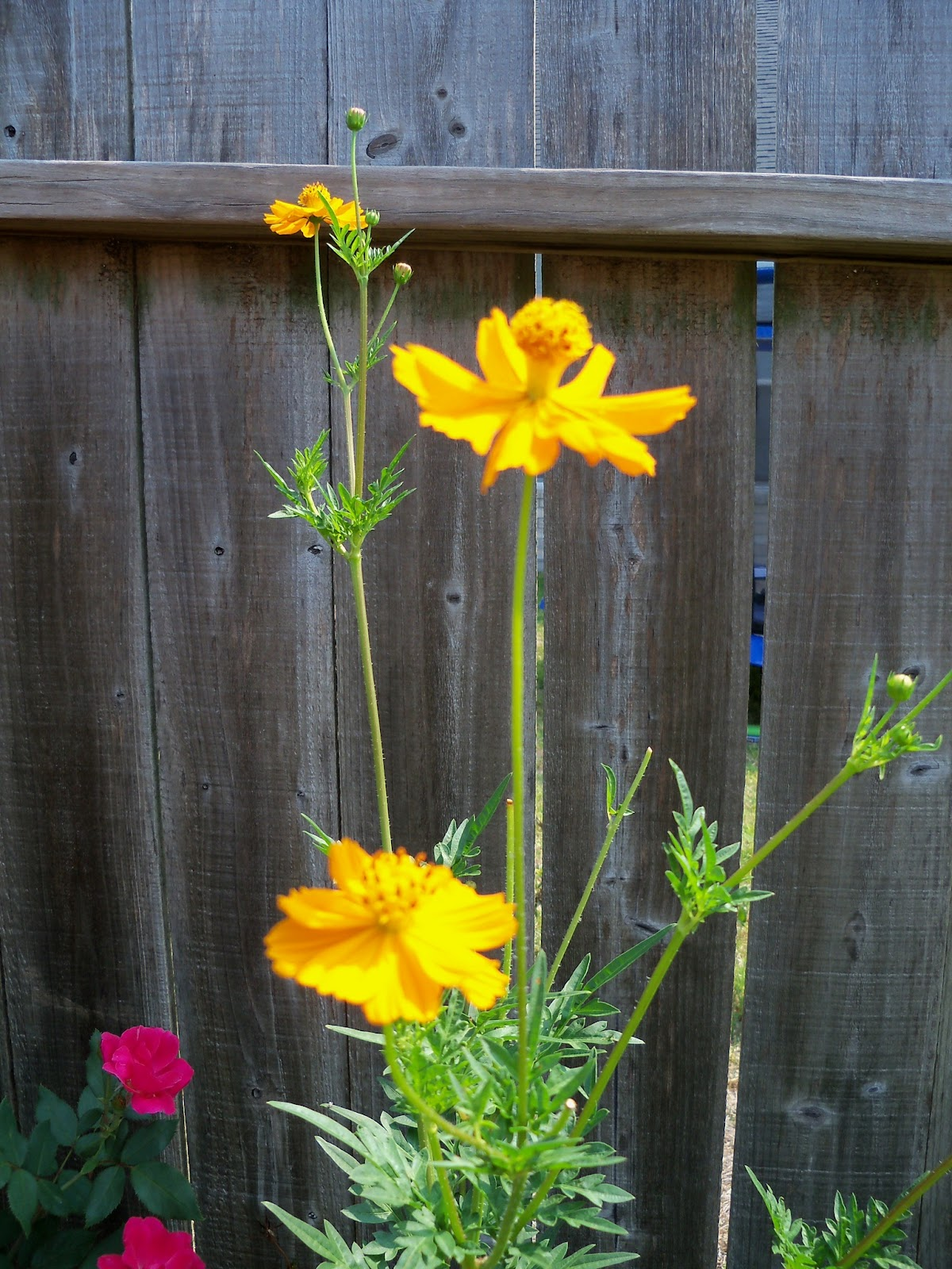 Gardening 2011 - 100_9351.JPG