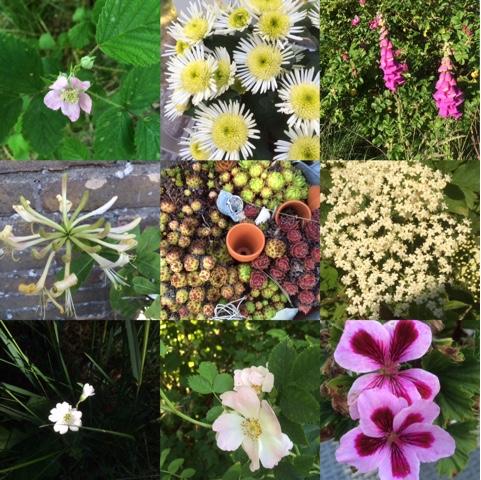 Bloeiende planten rond Alba Rose