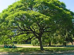 Album (digital) de fotos de Ibirapuera.