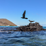 galapagos - Galapagos_FB-109.jpg