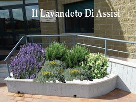 Progetti giardini online gratis progetti giardini privati for Idee per realizzare una fioriera