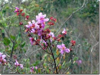 flores-silvestres-carrancas-3