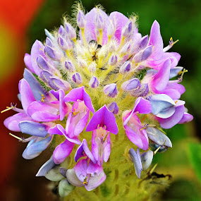 wild flower by Megarianti Megarianti - Nature Up Close Flowers - 2011-2013