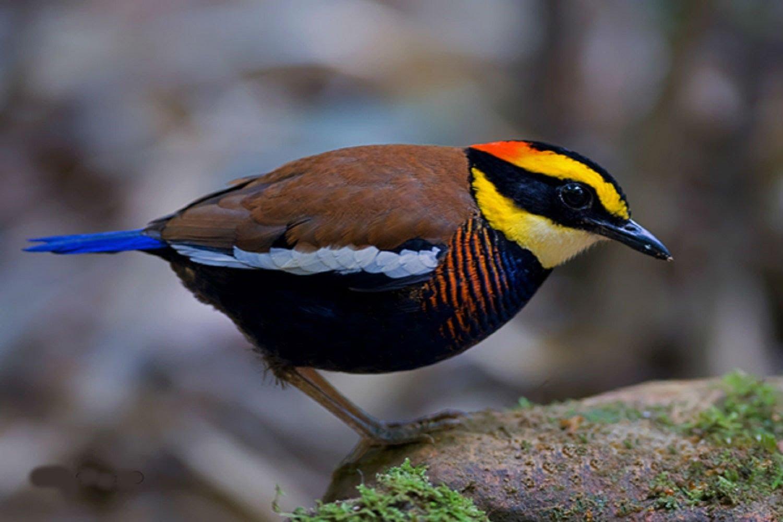 طيور خطيرة جداً قد تسبب لك الأذي الشديد لا تقترب منها أبداً