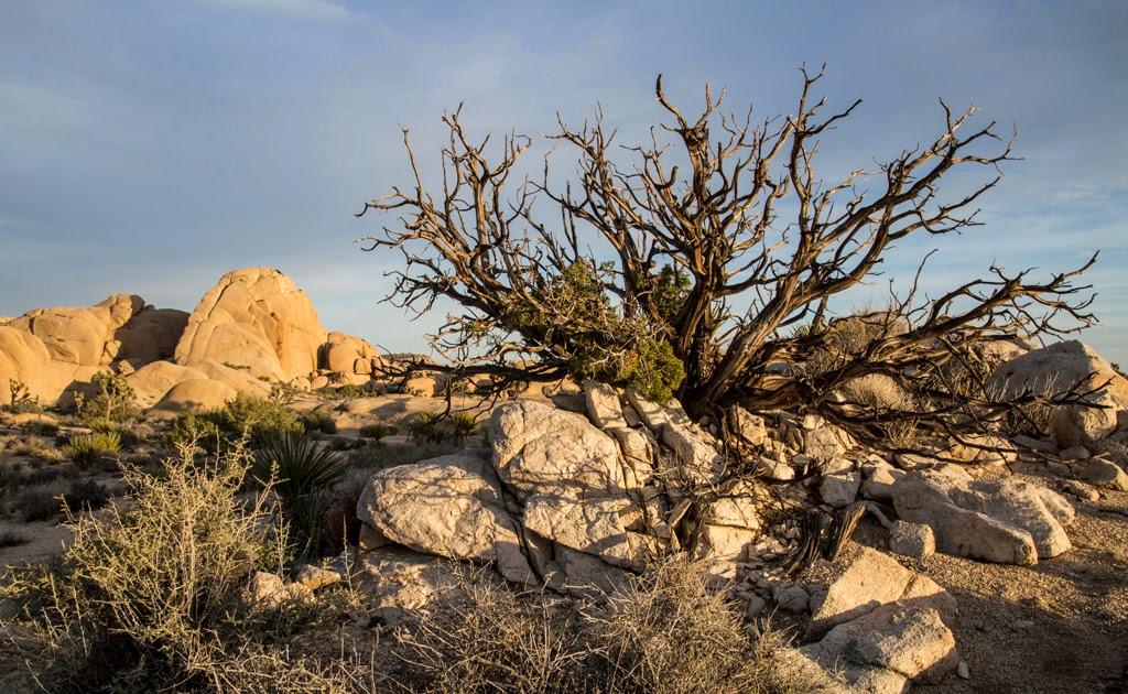 """Desert Sunset"" by Jonas Benjamins - 3d Place Place A General"