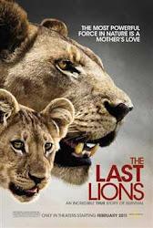 The Last Lions - Bầy sư tử cuối cùng
