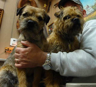 Which Border Terrier needs a haircut?