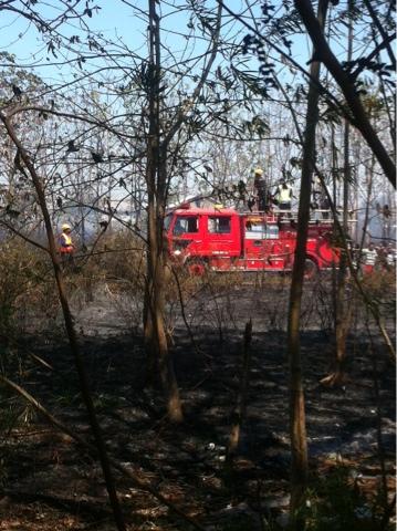 Hektaran Area Jati Emas Hangus Terbakar