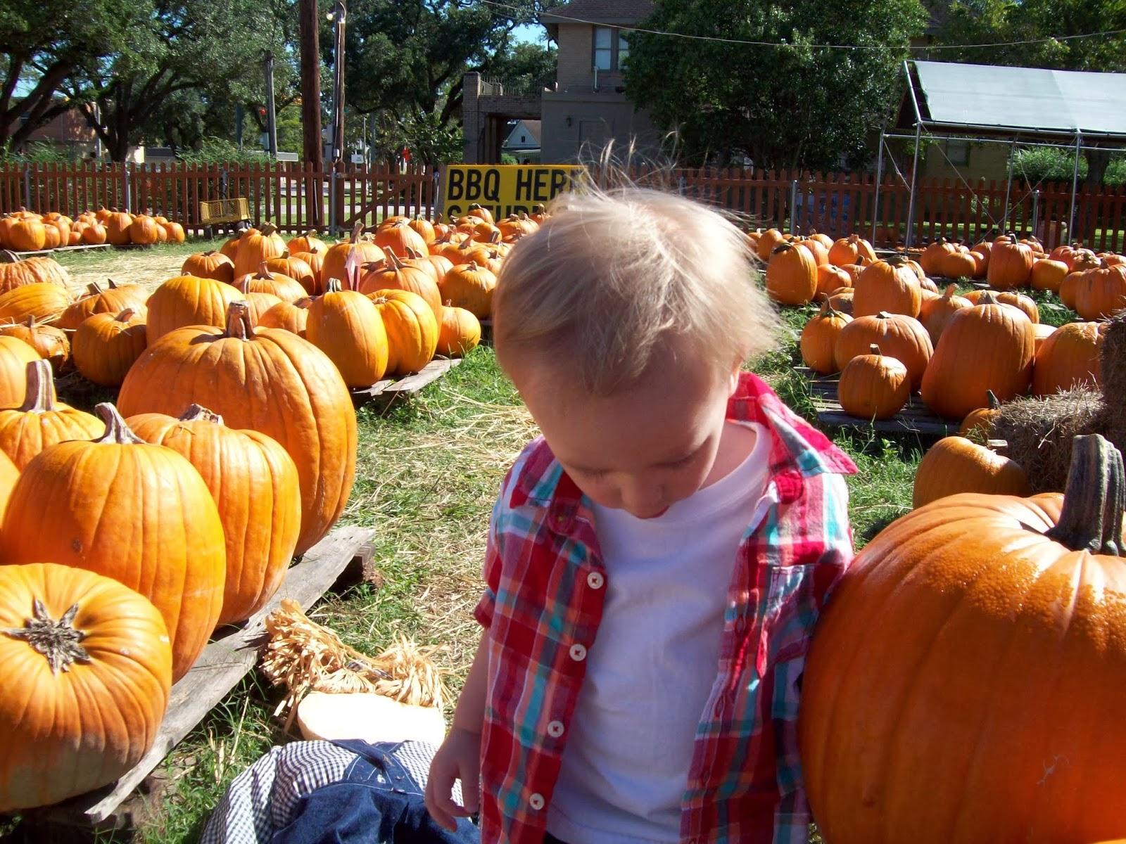 Pumpkin Patch - 114_6546.JPG
