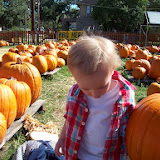 Pumpkin Patch - 114_6546.JPG
