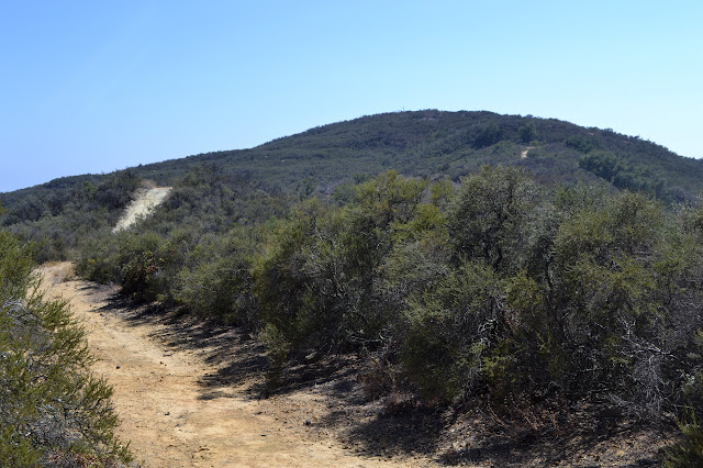 wide path through the chaparral