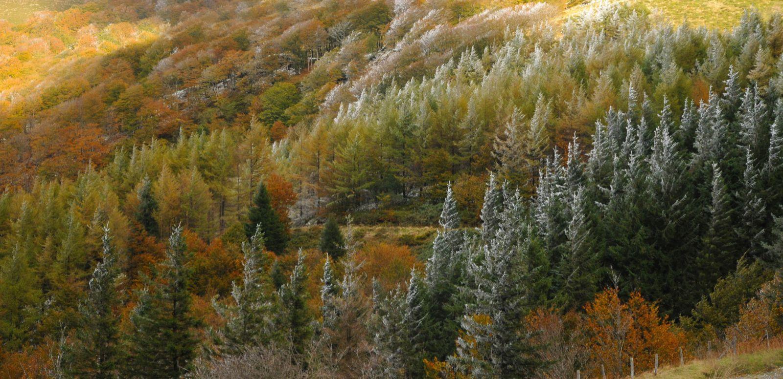 otoño, Irati por Joan