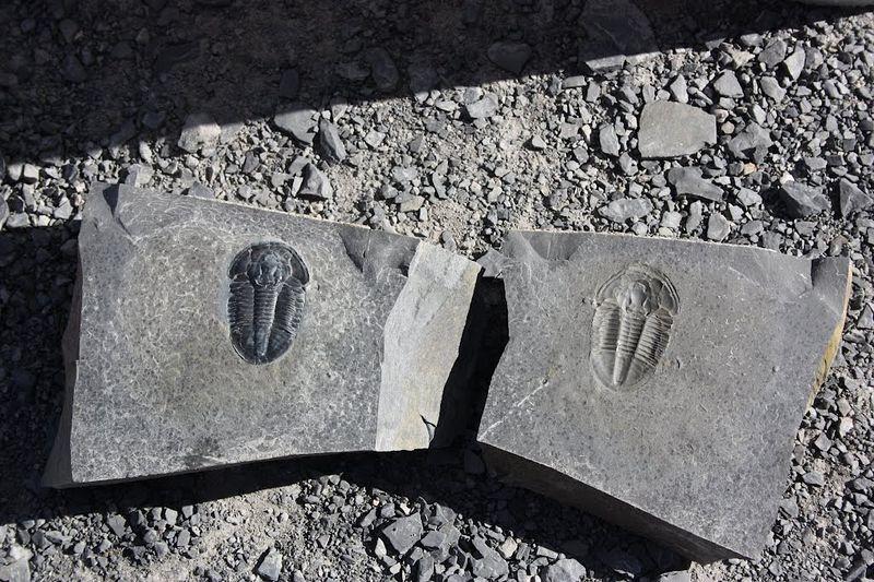 fossils-quarry-2