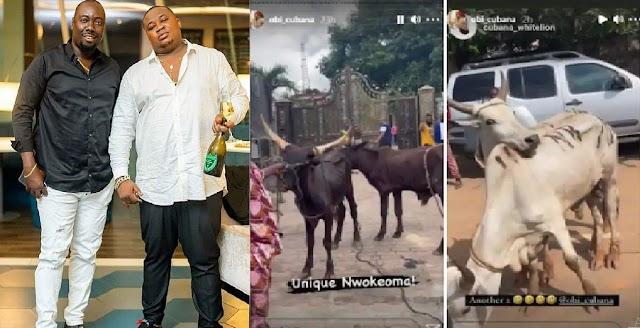 Cubana Chief Priest Gifts Former Boss, Obi Cubana, 46 Cows For His Mum's Burial [Photos/Video]