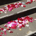 Mairie : pétales de roses
