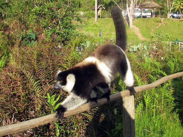 صور من مدغشقر Madagascar 14703981161