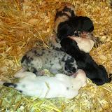 Gemma's babies @ 1 week