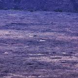 06-20-13 Hawaii Volcanoes National Park - IMGP5227.JPG