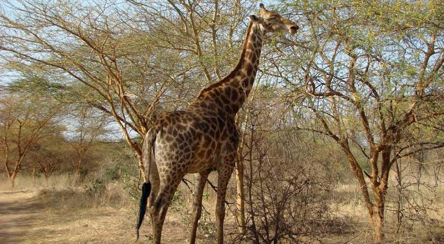 Reserva de Bandia, Senegal