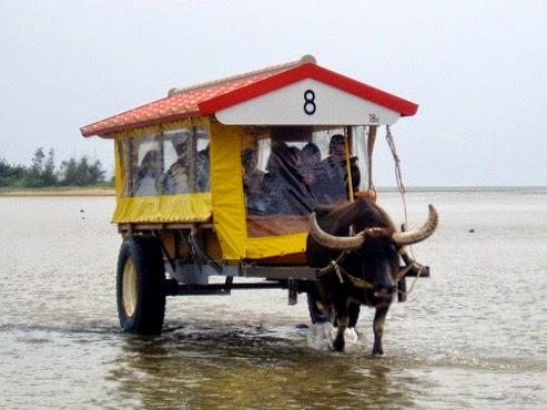 八重山旅行記|由布島水牛車