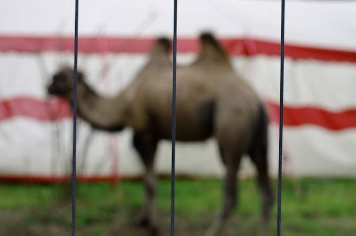 Ein verschwommenenes Foto eines Kamels