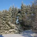 tn_lachaux-2010-12-22.jpg