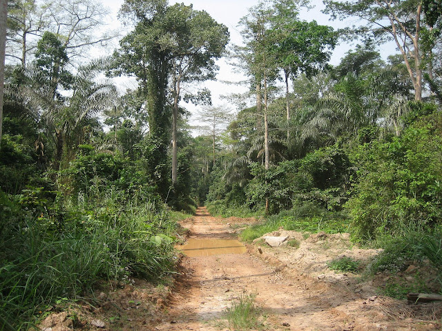 Bobiri Forest (Ghana), 22 janvier 2006. Photo : Henrik Bloch