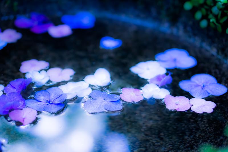 臥龍山荘 庭園 2