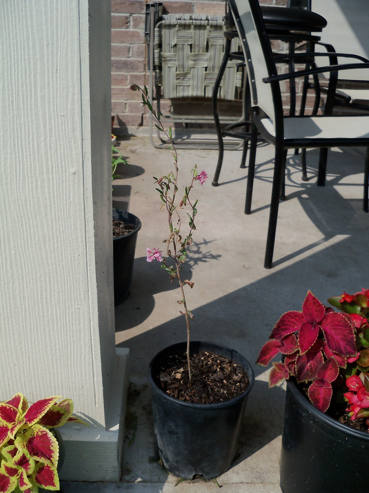 Gardening 2010, Part Two - 101_3436.JPG