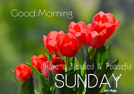 Good Morning Have A Blessed Sunday Sms Archidev