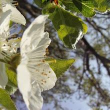 Zbiranje papirja, Ilirska Bistrica 2006 - KIF_8415.JPG