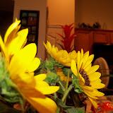 Bouquets - 115_2917.JPG