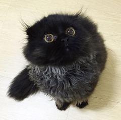 CUTE-Cat-02 (3)