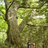 植物図鑑@千年の森自然学校