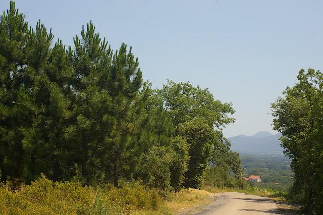 Biotope de Papilio machaon, Iphiclides feisthamelii et Brintesia circe. Sud de Bages (Pyr. orientales) et vue sur les Albères, 26 juin 2010. Photo : J.-M. Gayman