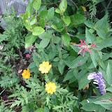 Gardening 2013 - IMG_20130526_103403.jpg