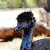 AnimalsOfAustralia